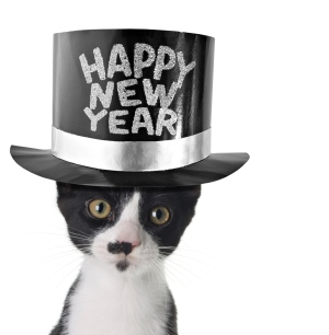 New Year Cat